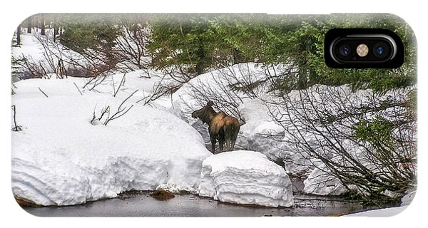 Moose In Alaska IPhone Case