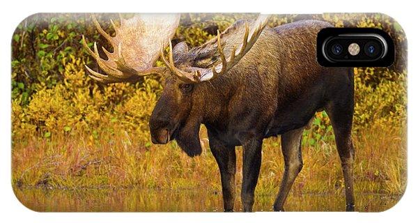 Mp iPhone Case - Moose In Glacial Kettle Pond  by Yva Momatiuk John Eastcott