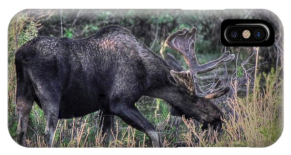 Moose In The Meadow IPhone Case