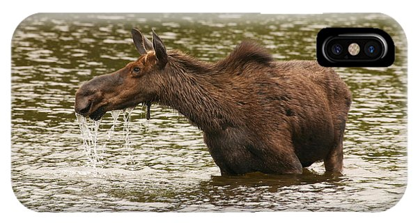 Moose In The Wilderness IPhone Case
