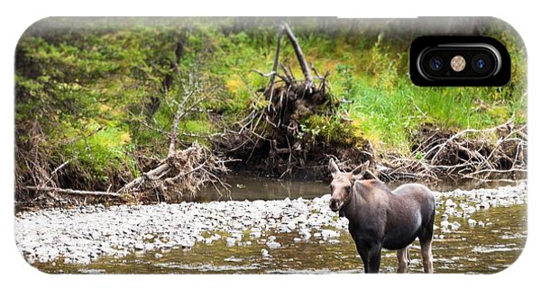 Moose In Yellowstone National Park   IPhone Case