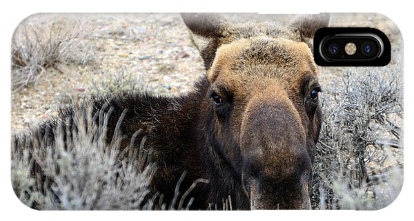 Moose Mugshot IPhone Case