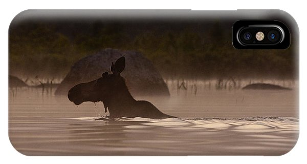 Fog iPhone Case - Moose Swim by Brent L Ander