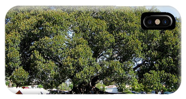 Moreton Fig Tree In Santa Barbara IPhone Case