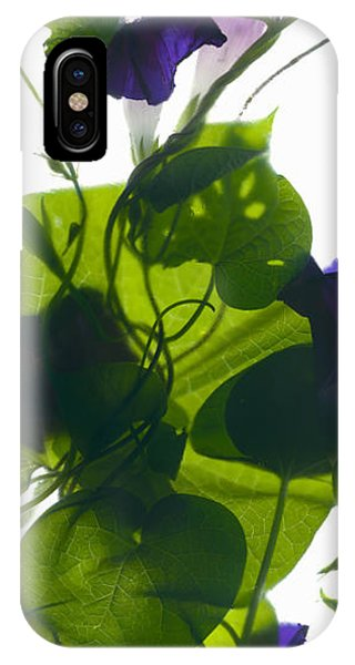 Morning Glory Rising IPhone Case