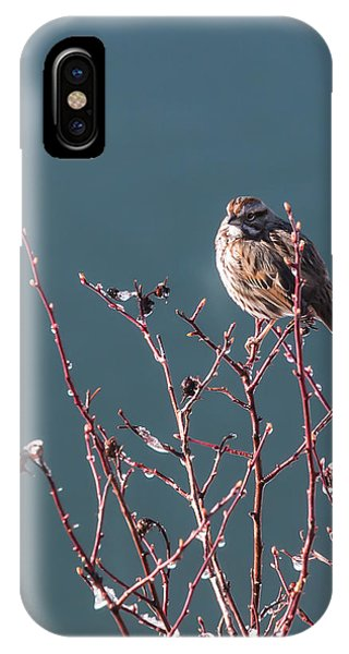 Morning Sparrow IPhone Case