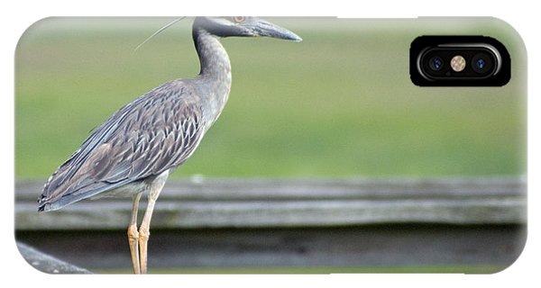 Morning Treasure Night Heron IPhone Case