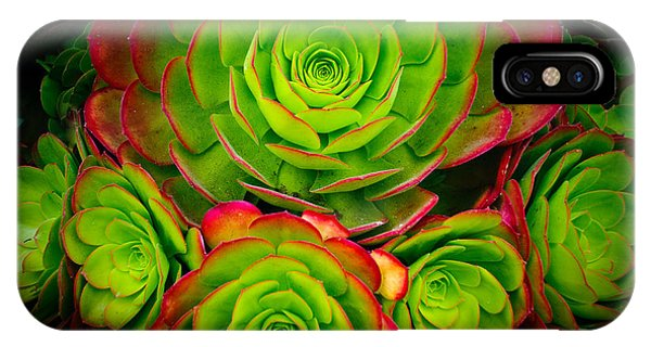 Morro Bay Echeveria IPhone Case