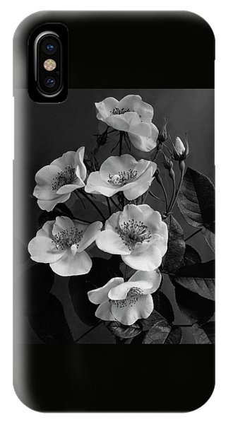 Moschata Alba IPhone Case