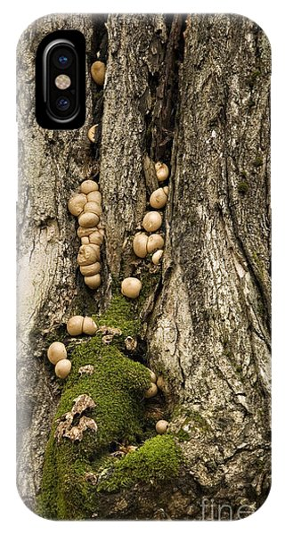 Moss-shrooms On A Tree IPhone Case