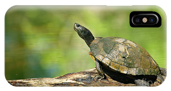 Mossy Turtle IPhone Case