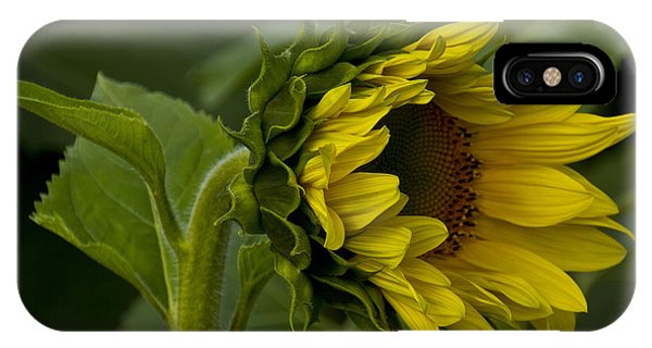 Mostly Open Sunflower IPhone Case