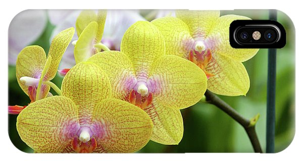 Golden Gardens iPhone Case - Moth Orchids (phalaenopsis 'golden Wish') by Neil Joy/science Photo Library