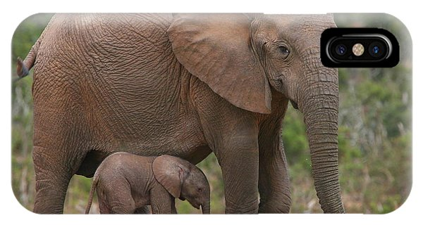Elephant iPhone Case - Mother And Calf by Bruce J Robinson