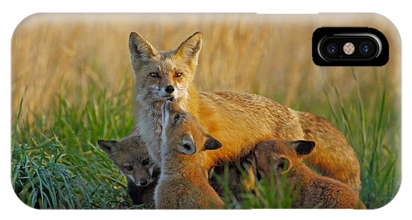 Mother Fox And Kits IPhone Case
