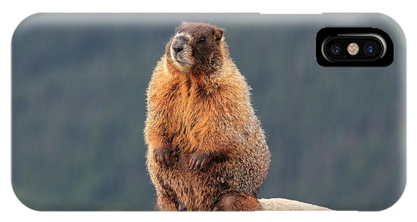 Mother Marmot IPhone Case
