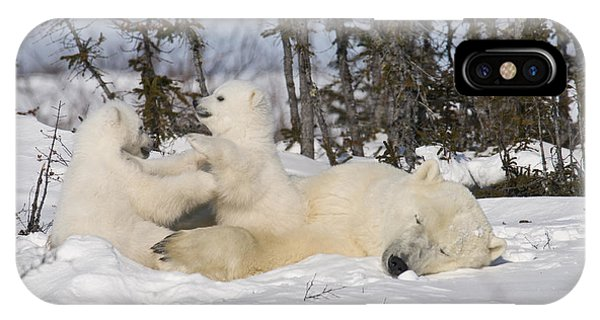 Mother Polar Bear Sleeps While Her Cubs Play IPhone Case