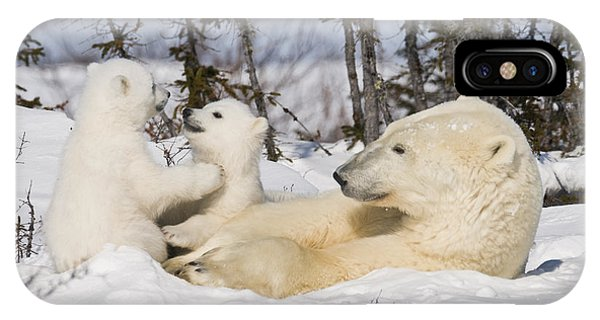 Mother Polar Bear Watches Her Cubs Play IPhone Case