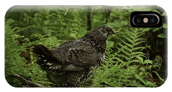 Mother Watching Her Chicks IPhone Case
