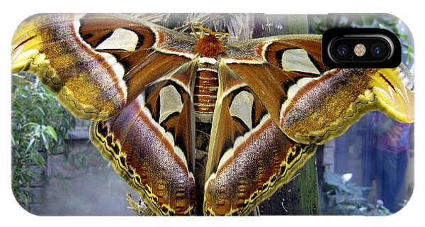 Atlas Moth IPhone Case