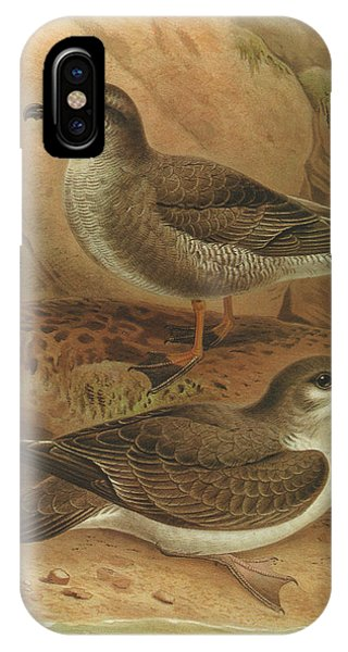 Mottled iPhone Case - Mottled Petrel And Buller's Shearwater by Dreyer Wildlife Print Collections