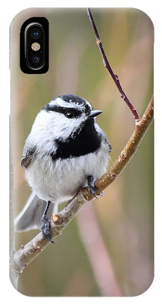 Mountain Chickadee IPhone Case