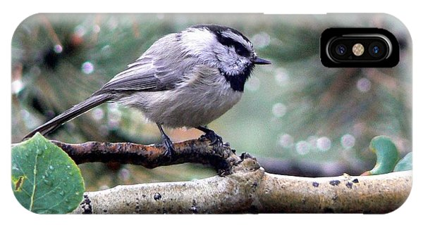 Mountain Chickadee On A Rainy Day IPhone Case