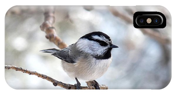 Mountain Chickadee On Branch IPhone Case