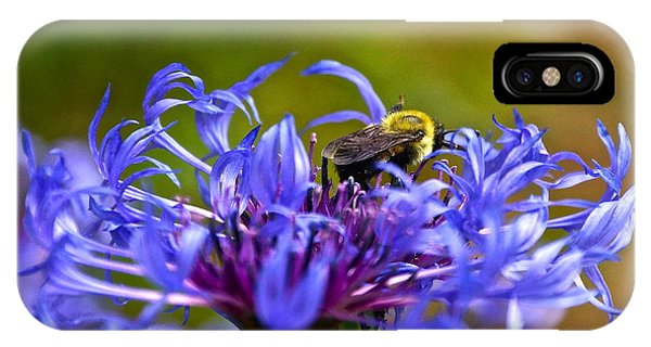 Mountain Cornflower And Bumble Bee IPhone Case