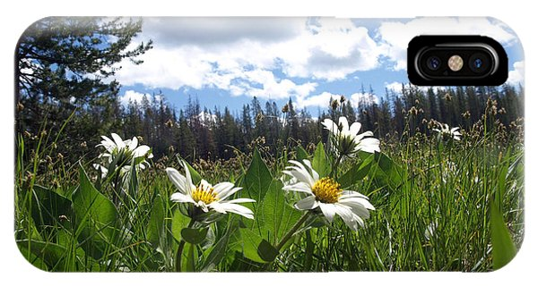 Mountain Daisies IPhone Case