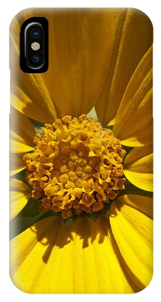 Mountain Daisy IPhone Case