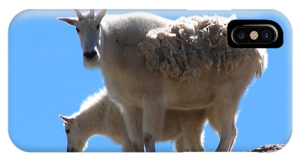 Wildlife Er iPhone Case - Mountain Goat Mother And Baby by Teresa Cox