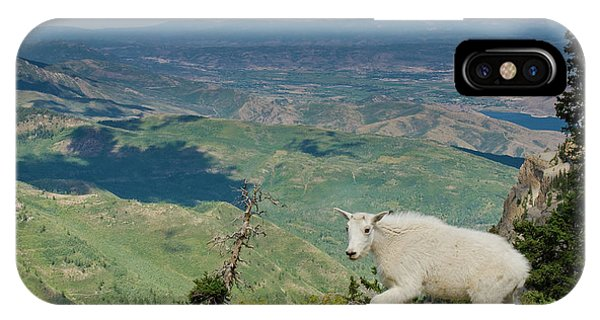 Mountain Goat, Oreamnos Americanus Phone Case by Howie Garber