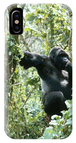 Mountain Gorilla IPhone Case