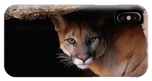 Mp iPhone Case - Mountain Lion Peering From Cave by Yva Momatiuk John Eastcott
