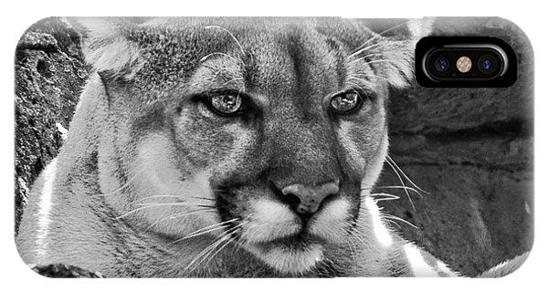 Mountain Lion Bergen County Zoo IPhone Case