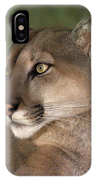 Mountain Lion Portrait Wildlife Rescue IPhone Case