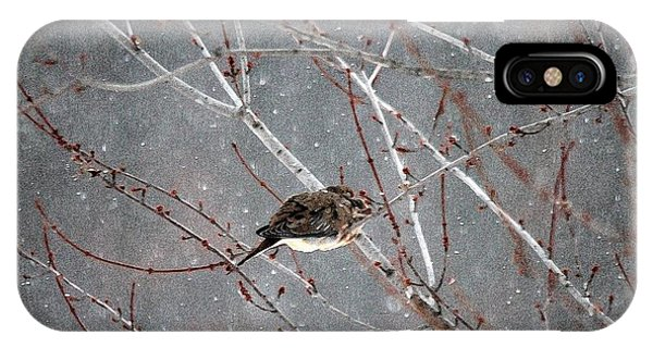 iPhone Case - Mourning Dove Asleep In Snowfall by J McCombie