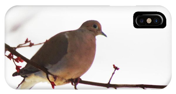 Mourning Dove In Snow Glow IPhone Case