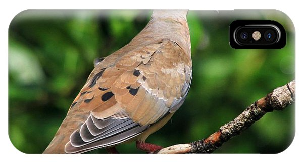 Mourning Dove Posing IPhone Case