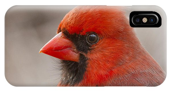 Mr Cardinal Portrait IPhone Case