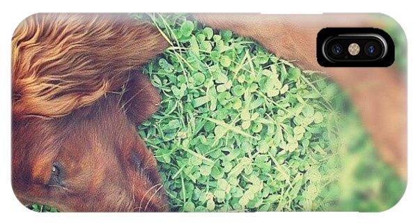 Green iPhone Case - Mr Dog by Emanuela Carratoni