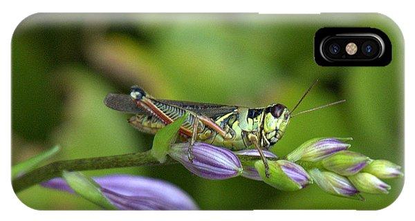 Mr. Grasshopper IPhone Case
