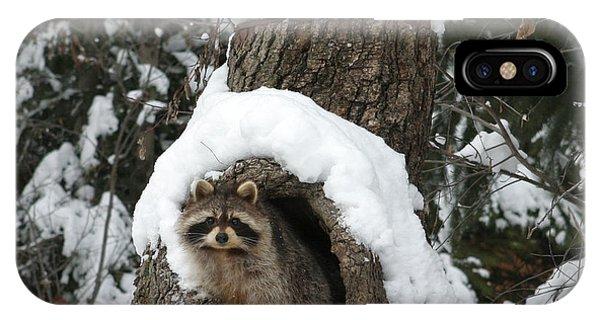 Mr. Raccoon IPhone Case