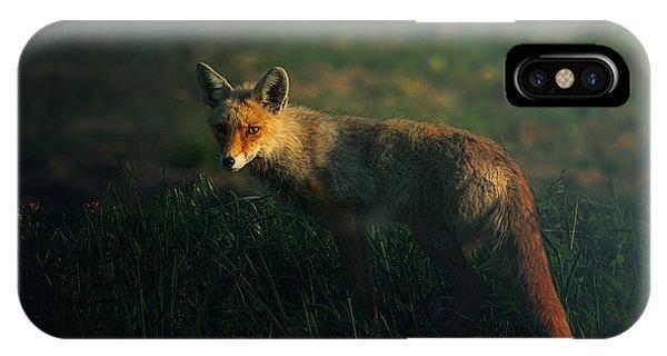 Hunt iPhone Case - Mr.fox by Sina Pezeshki