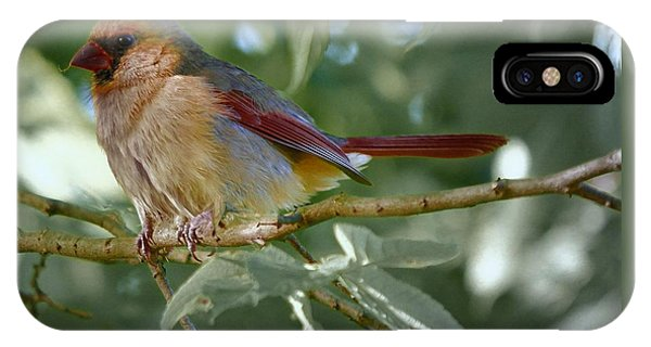 Mrs. Cardinal IPhone Case