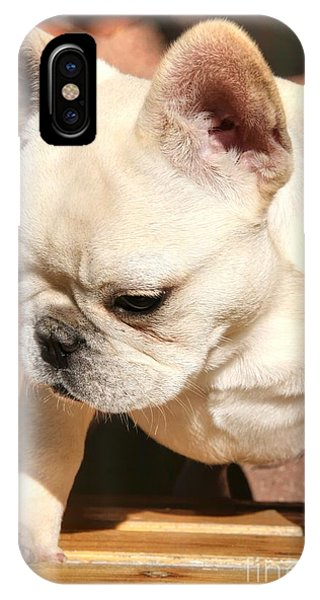 French Bulldog Ms Quiggly  IPhone Case