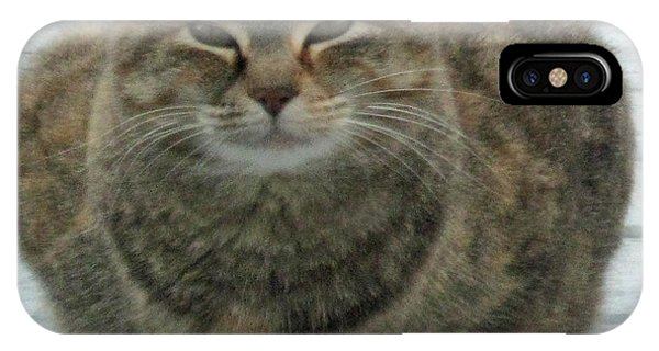 Muffin The Feral Cat IPhone Case