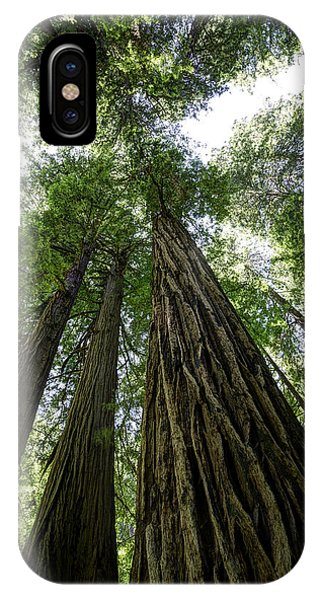 Muir Woods I IPhone Case