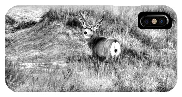 Mule Buck B/w IPhone Case